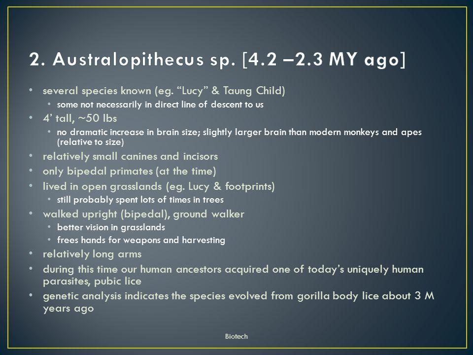 2. Australopithecus sp. [4.2 –2.3 MY ago]